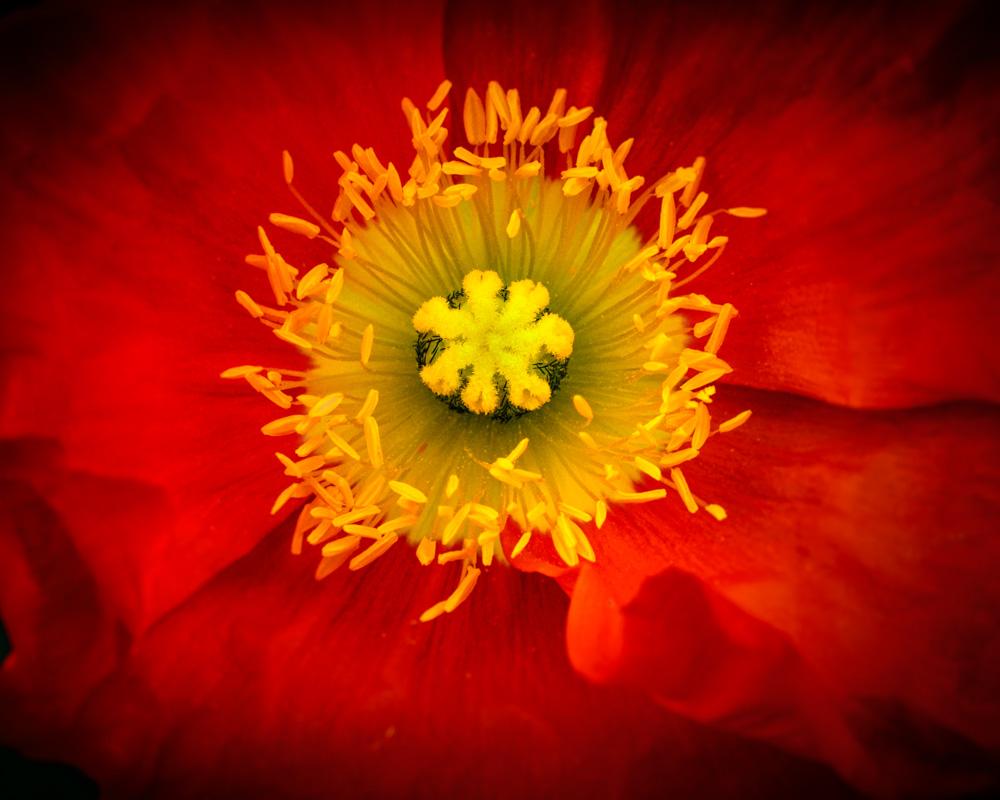 natureflowers3-13.jpg