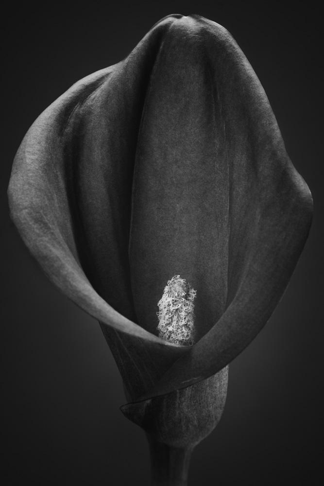 natureflowers3-14.jpg
